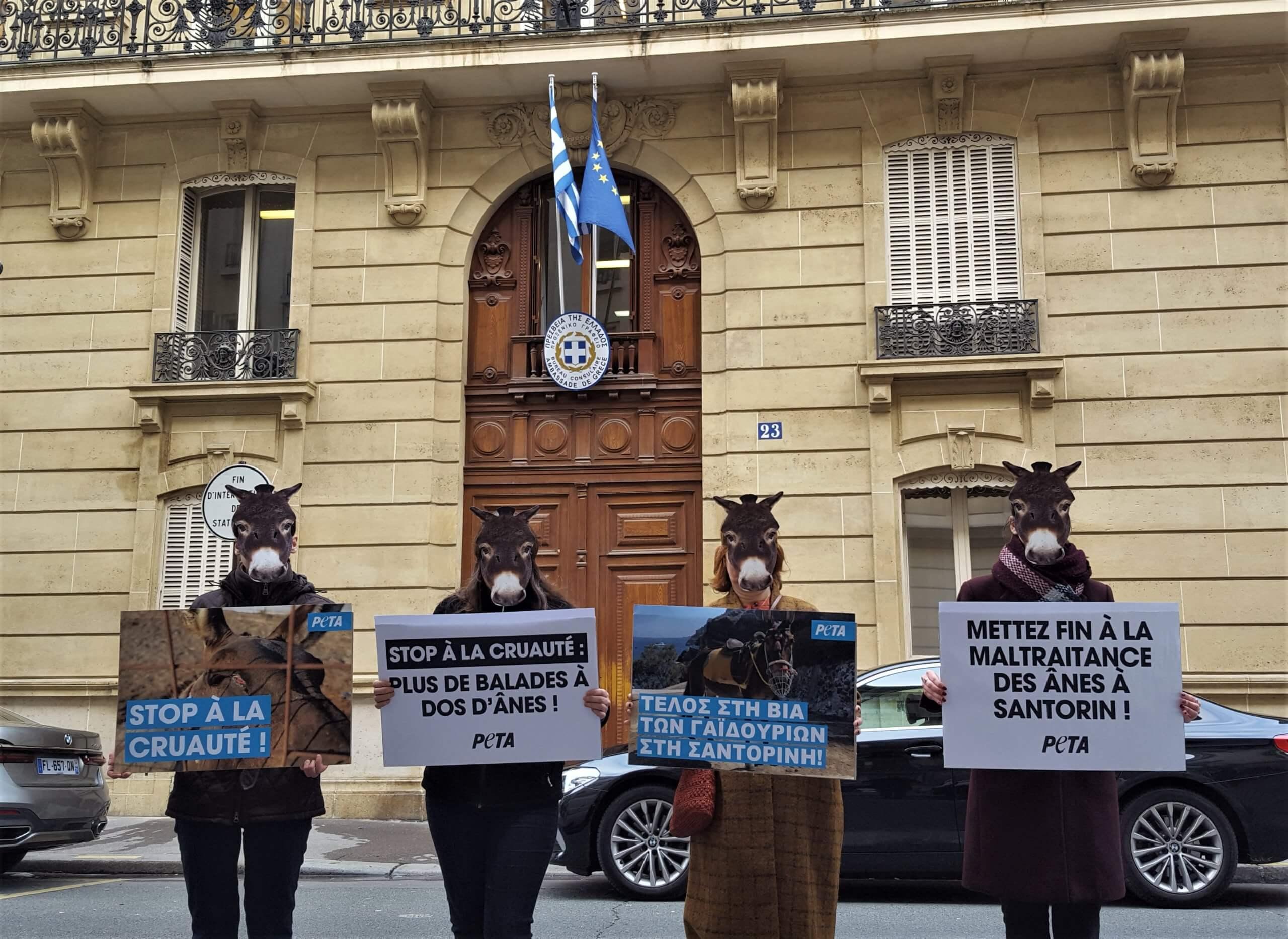 Des « ânes » protestent devant les ambassades grecques en France et dans le monde entier