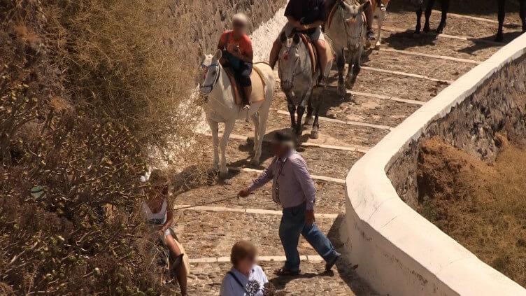 Nouvelles images de l'île de Santorin : la maltraitance des ânes et des mules continue