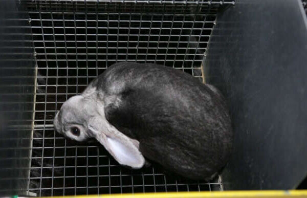 Demandez l'interdiction de la production de fourrure et d'angora en France