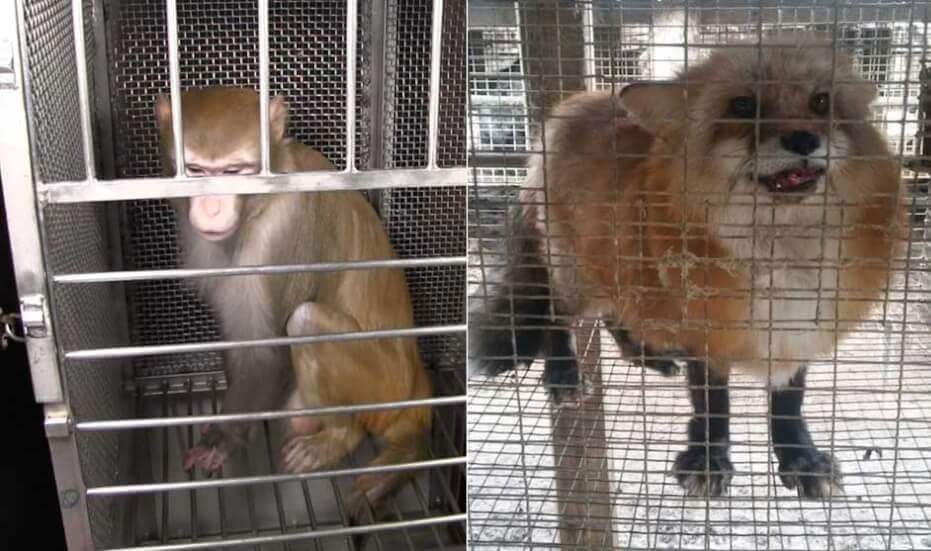 PETA ne ralentit pas ses missions car les animaux ont encore besoin de notre aide