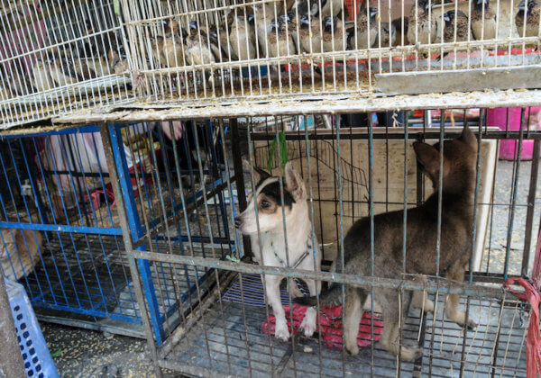 URGENT : aidez à fermer les marchés d'animaux vivants qui engendrent des maladies mortelles