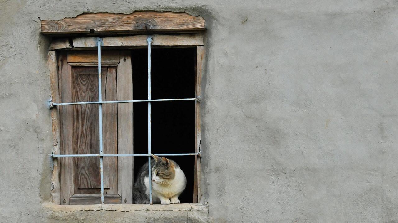 Comment prendre soin de ses animaux en période de confinement