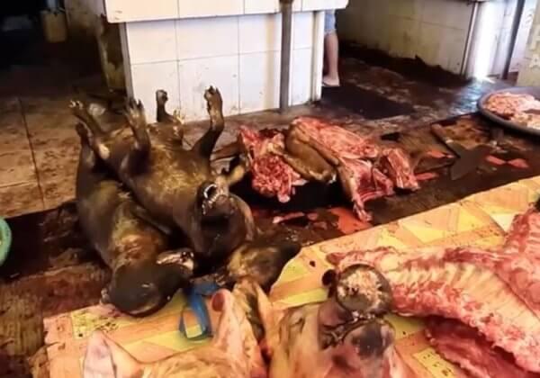 VIDÉO : une enquête de PETA Asie révèle que les « marchés humides » sont toujours ouverts