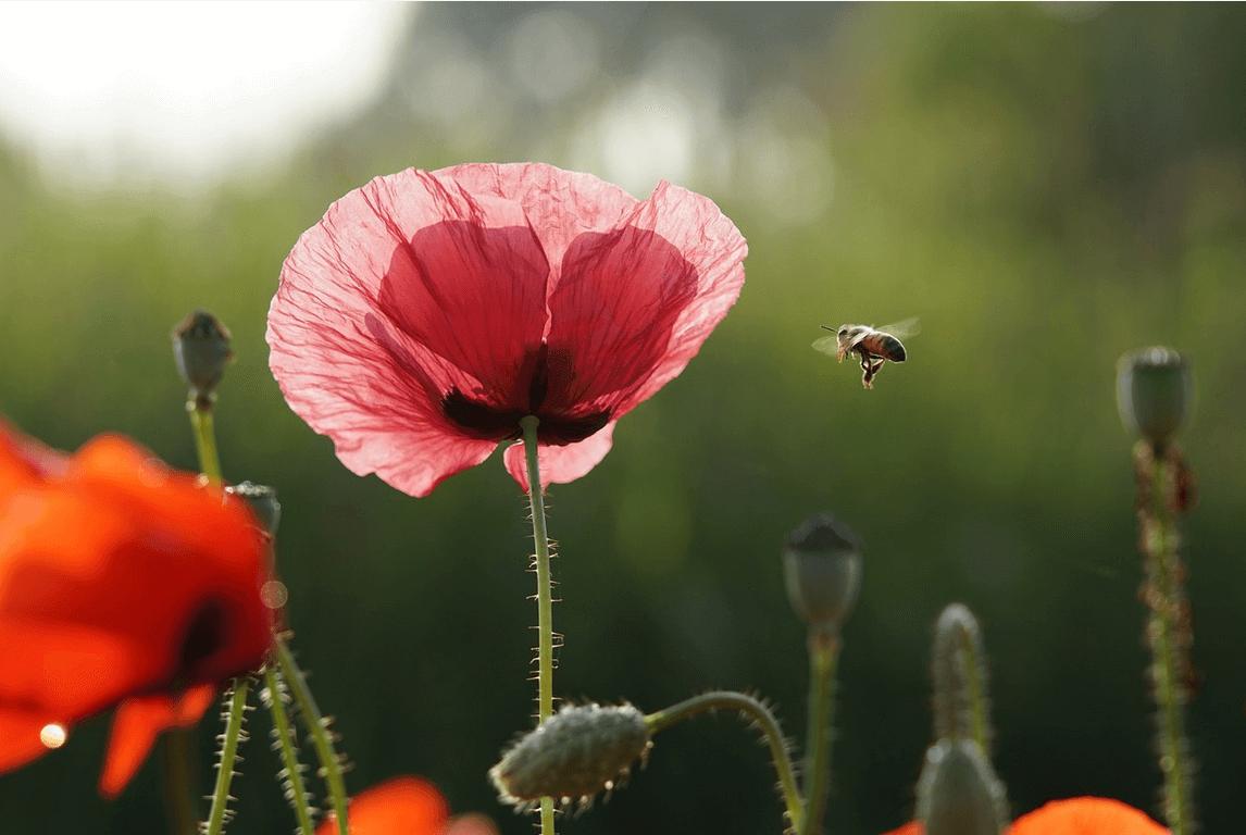 Cinq façons d'agir en cette Journée de la Terre