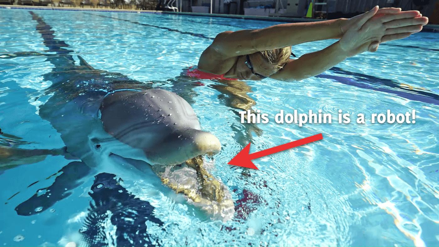 Un dauphin robot pour remplacer les cétacés captifs ? Prenez-en note, Marineland