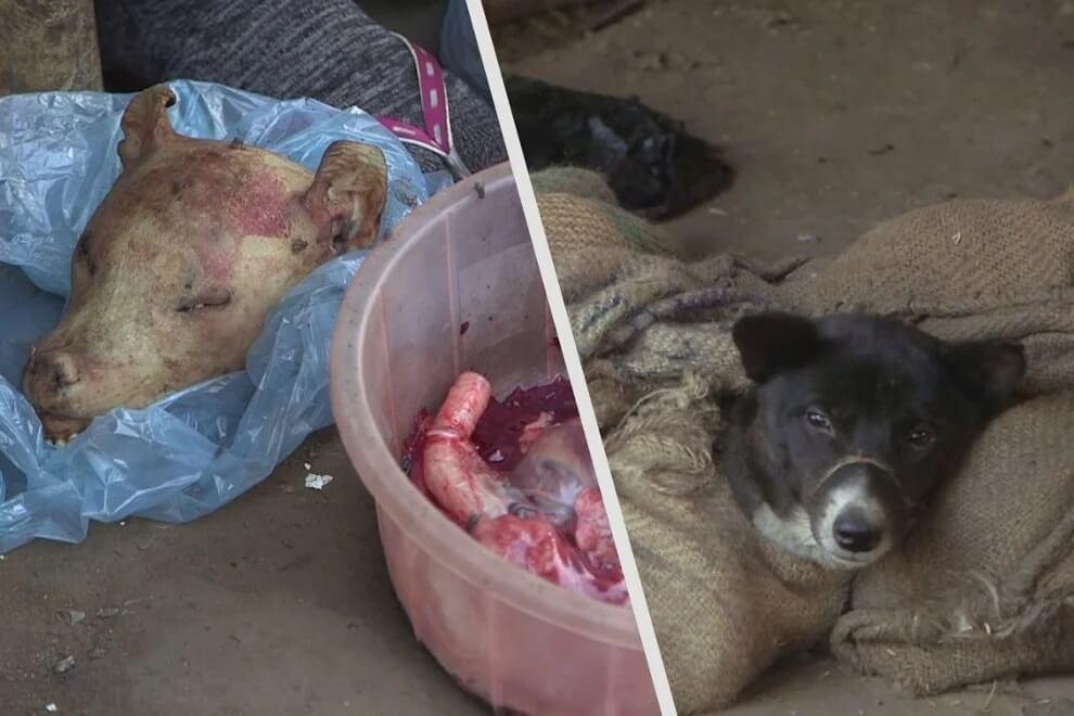 Chiens matraqués à mort et viande de singe – dans les marchés indiens d'animaux vivants propices aux maladies