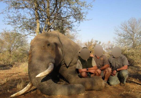 PETA dévoile les liens secrets du président sud-africain avec l'industrie de la chasse au trophée