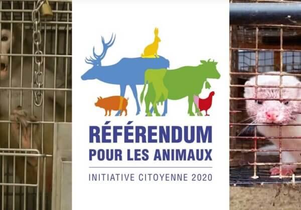 Historique : participez au premier référendum de France pour les animaux