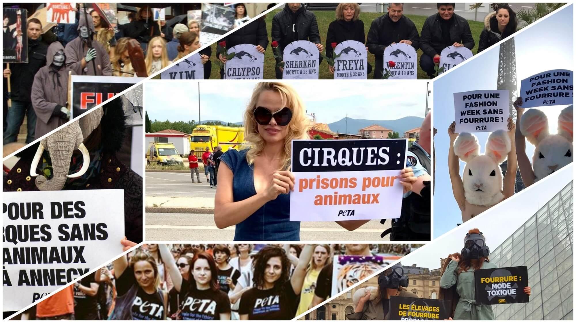 Victoire historique ! La France met fin à l'élevage de visons, aux delphinariums et à la présence d'animaux sauvages dans les cirques !
