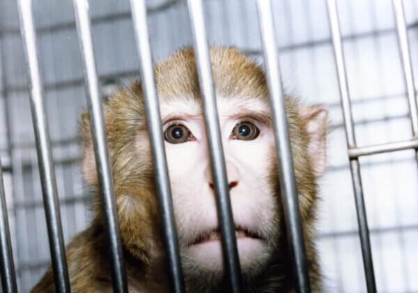 Le New Deal de PETA Royaume-Uni pour réformer la recherche biomédicale et les essais réglementaires