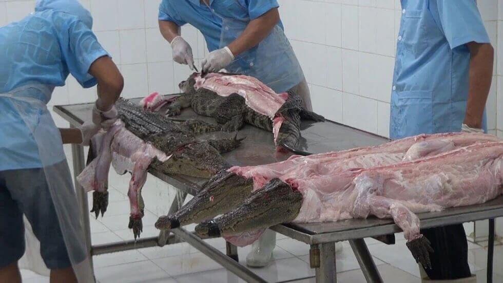 PETA répond à Louis Vuitton : l'utilisation de peaux de crocodile n'est pas sans cruauté