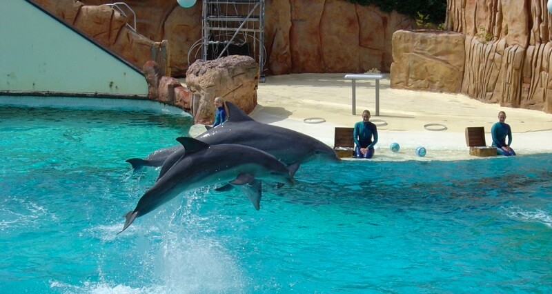 Une victoire douce-amère : le Parc Astérix ferme son delphinarium