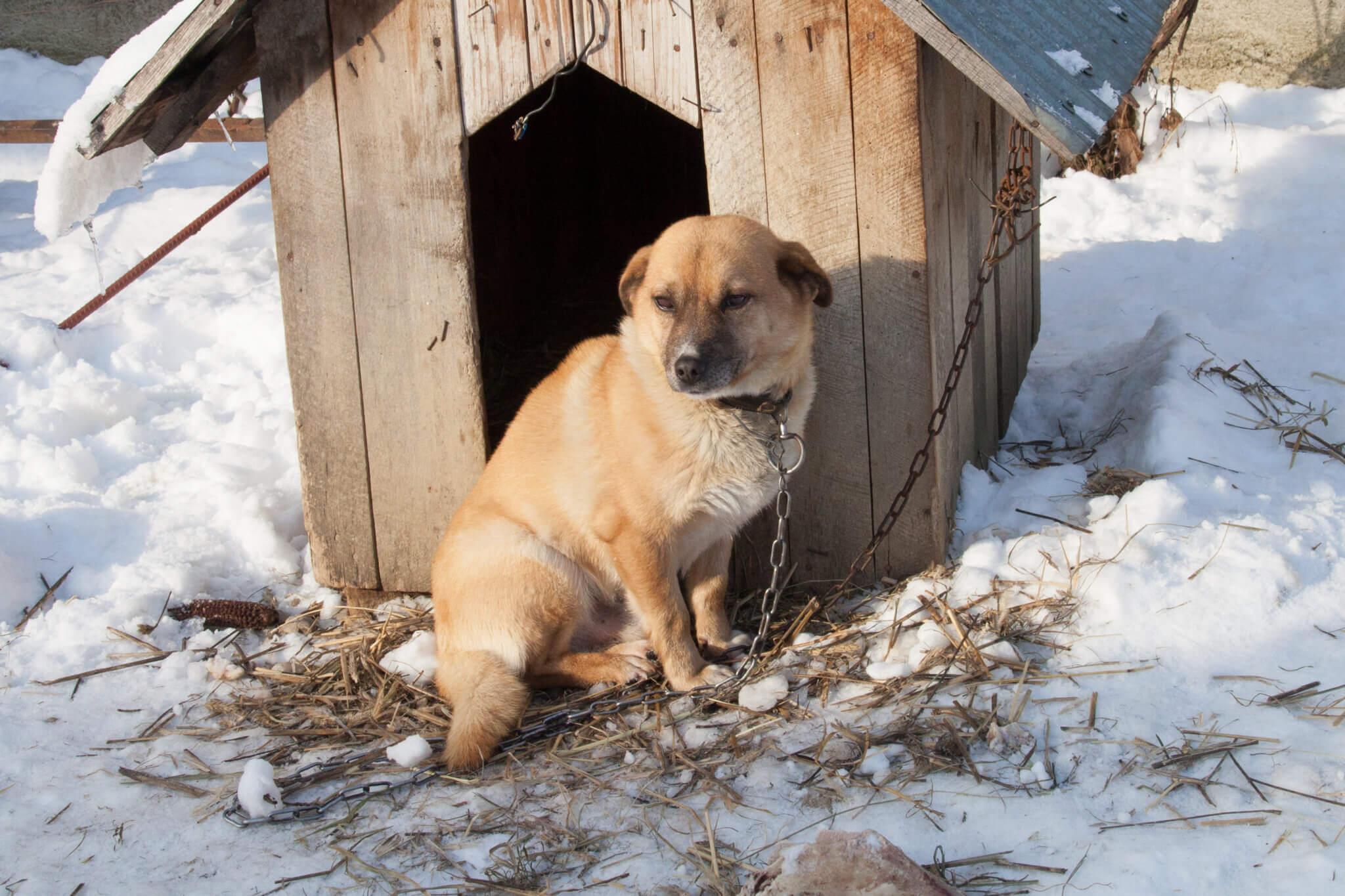 Voici comment vous pouvez aider les animaux sans abri en Roumanie cet hiver