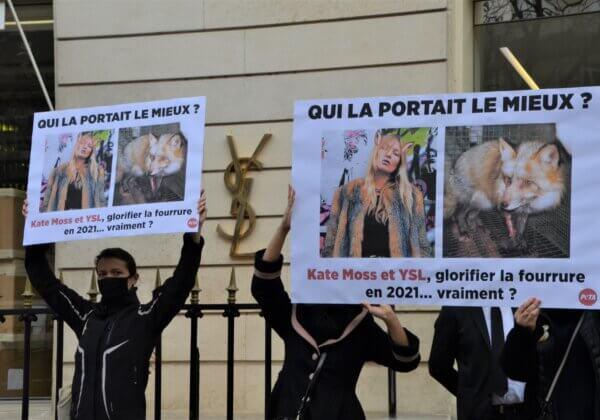 Saint Laurent et Brioni doivent renoncer à la fourrure – exprimez-vous !