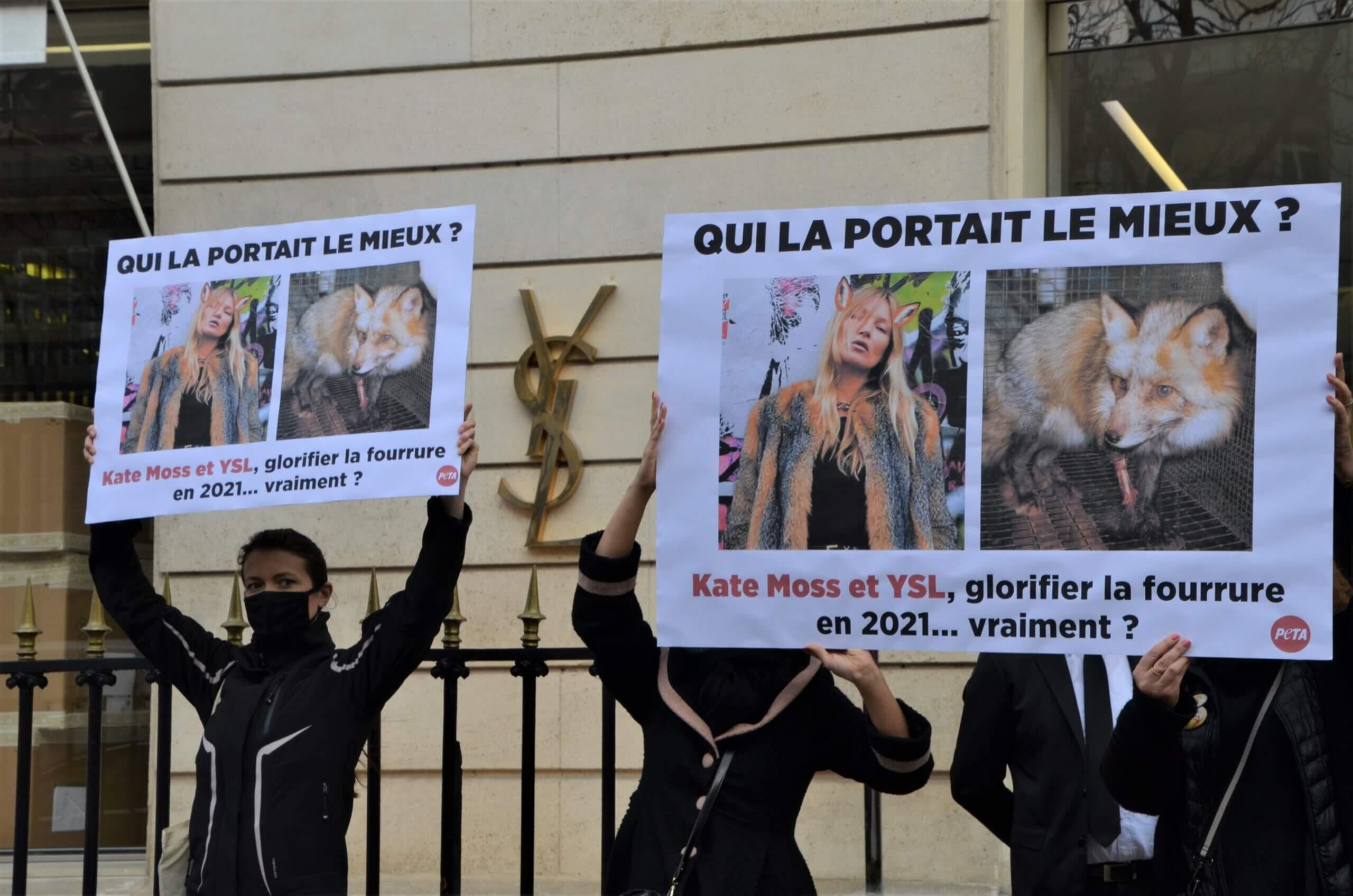 PETA à Yves Saint Laurent : « La fourrure n'a rien de glamour »