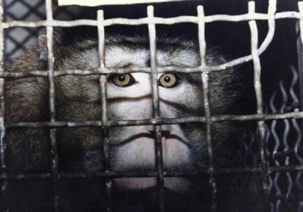 Le gouvernement des Pays-Bas a rompu ses promesses et n'a fait aucun progrès dans le remplacement des expériences sur les animaux