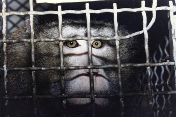 Appelez le gouvernement néerlandais à devenir un véritable leader mondial en matière de recherche sans animaux d'ici 2025