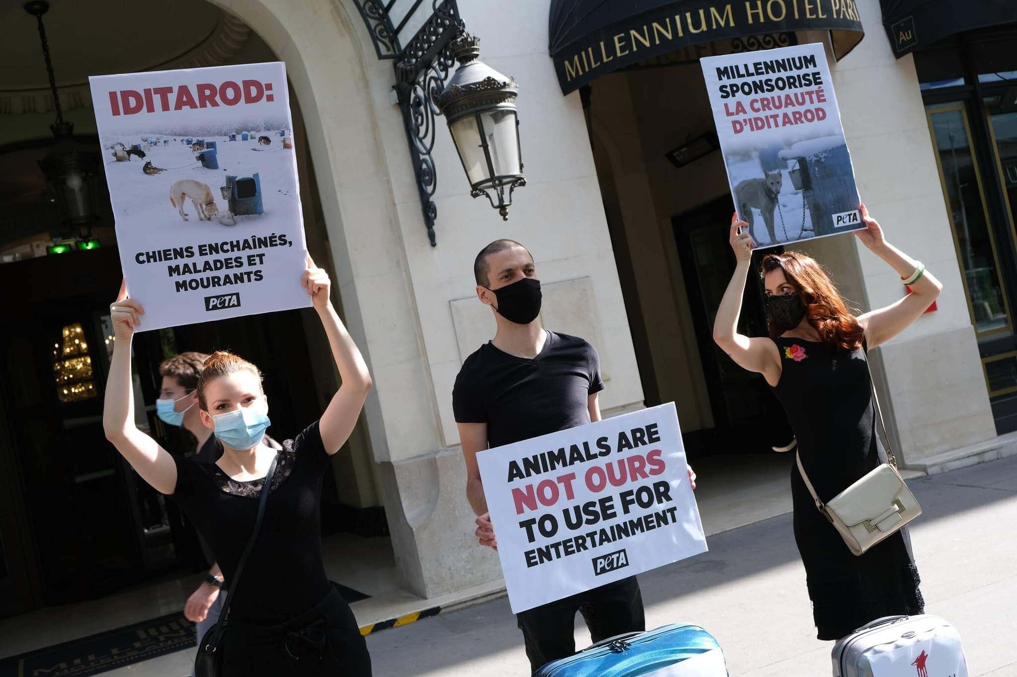 L'hôtel Millennium fait face à une protestation de PETA pour ses liens avec l'Iditarod