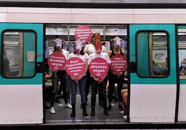 Des « vaches » et des « moutons » dans le métro pour protester contre l'exportation d'animaux vivants