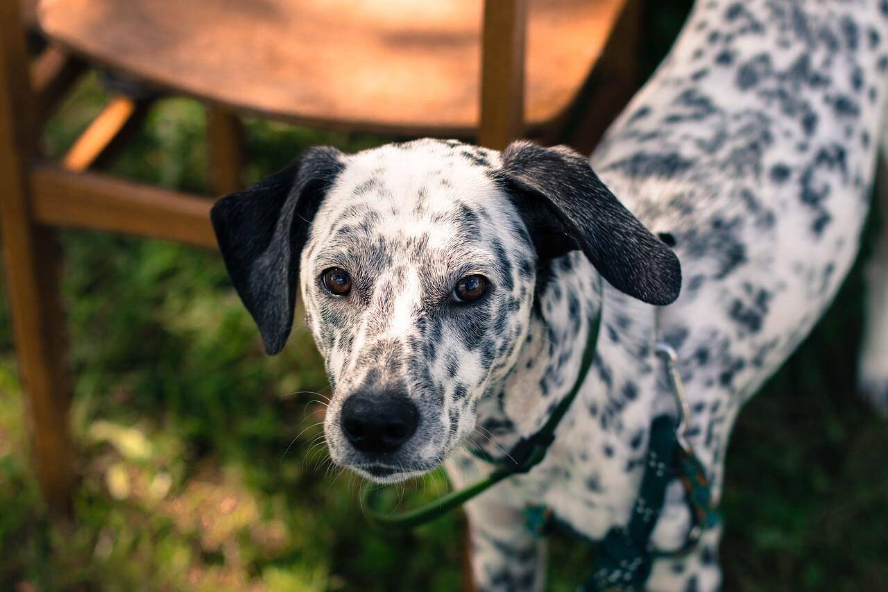Bonne nouvelle : « Cruella » de Disney invite le public à se rendre dans un refuge pour animaux
