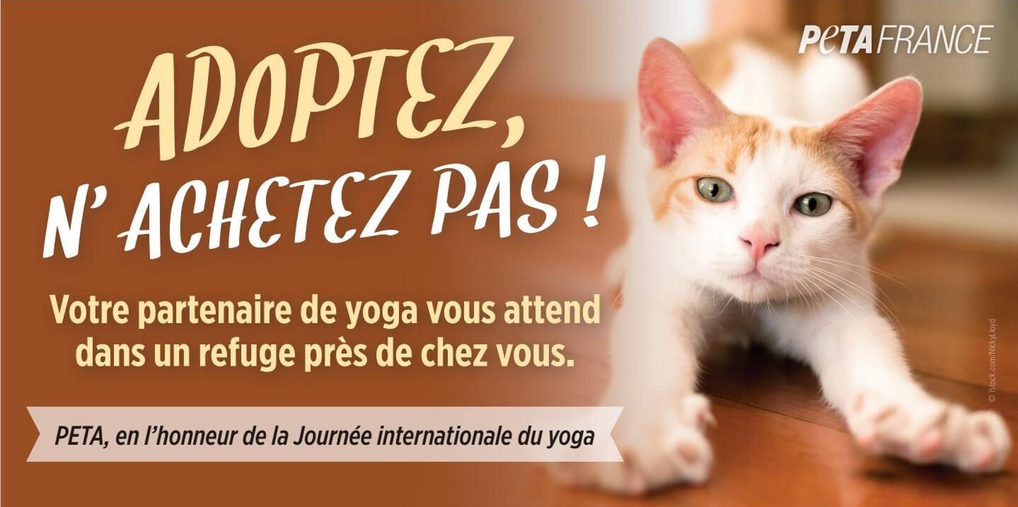 Journée internationale du yoga : adoptez un partenaire dans un refuge animalier