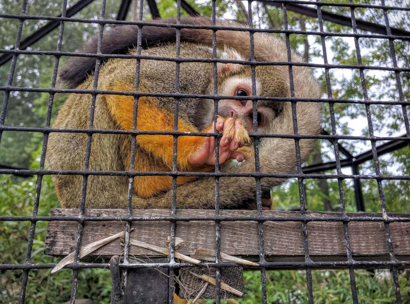 Pourquoi vous ne devriez jamais regarder les webcams des zoos