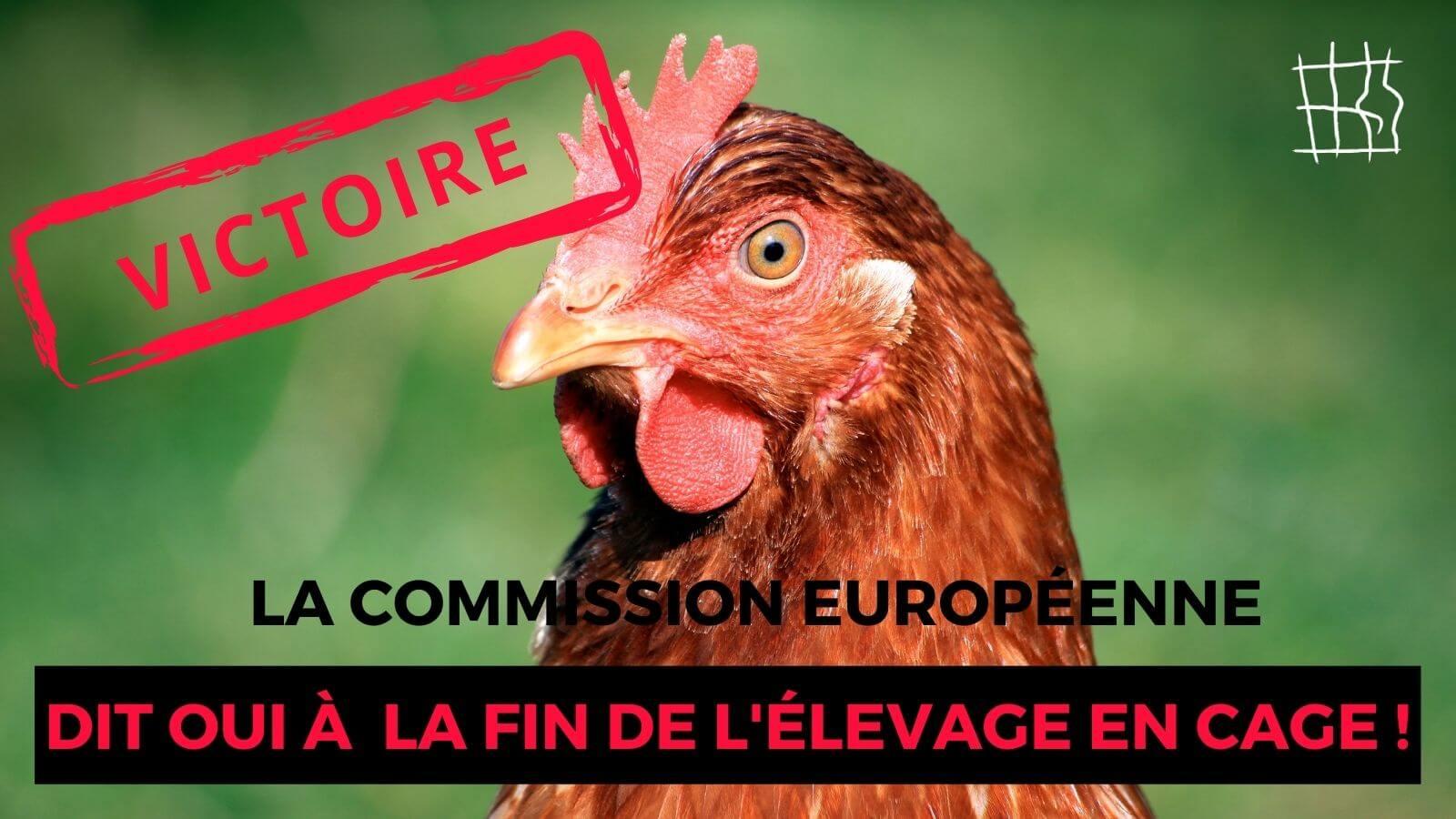 L'histoire est en marche ! La Commission européenne s'engage à interdire l'élevage en cage