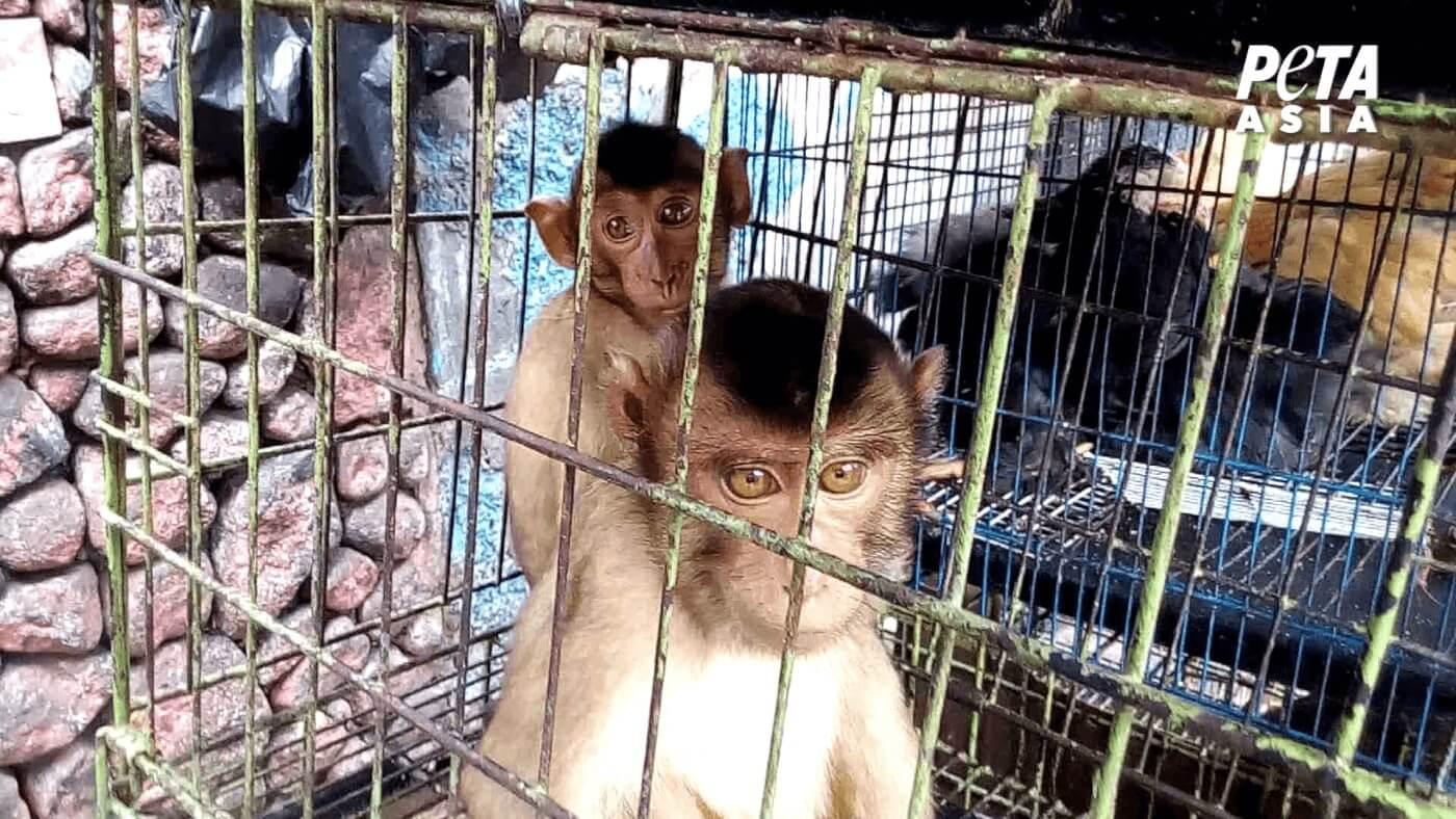 Nouvelles images alarmantes : les affaires continuent dans les marchés d'animaux vivants