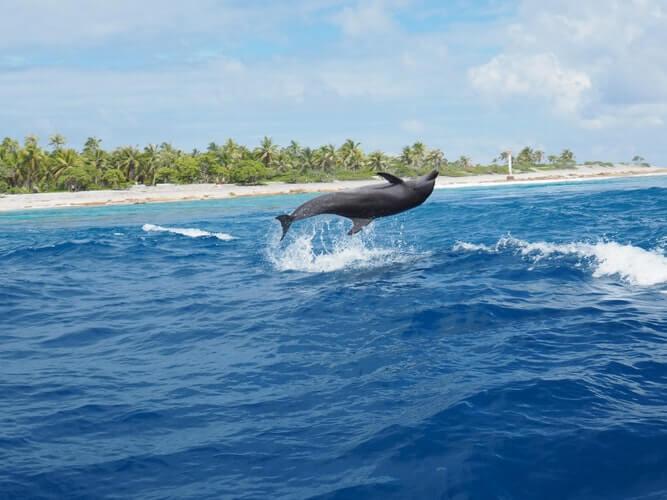 Le Club Med s'engage pour les orques, les éléphants et d'autres animaux grâce à une nouvelle politique