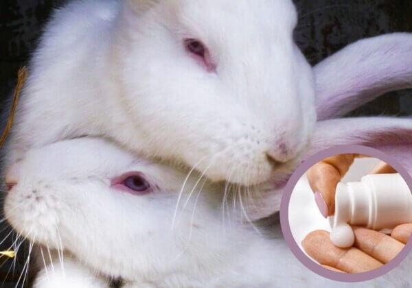 5 500 rats, lapins et poissons condamnés à mort dans l'UE pour une crème solaire