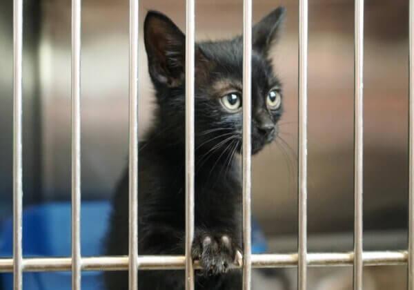 Appelez Le Bon Coin à cesser de vendre des animaux en ligne