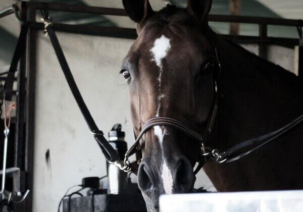 Appelez le Comité international olympique à interdire toutes les épreuves équestres