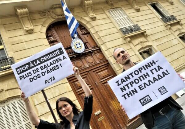 Des militants de PETA demandent la fin de l'utilisation d'animaux comme « taxis » à Santorin