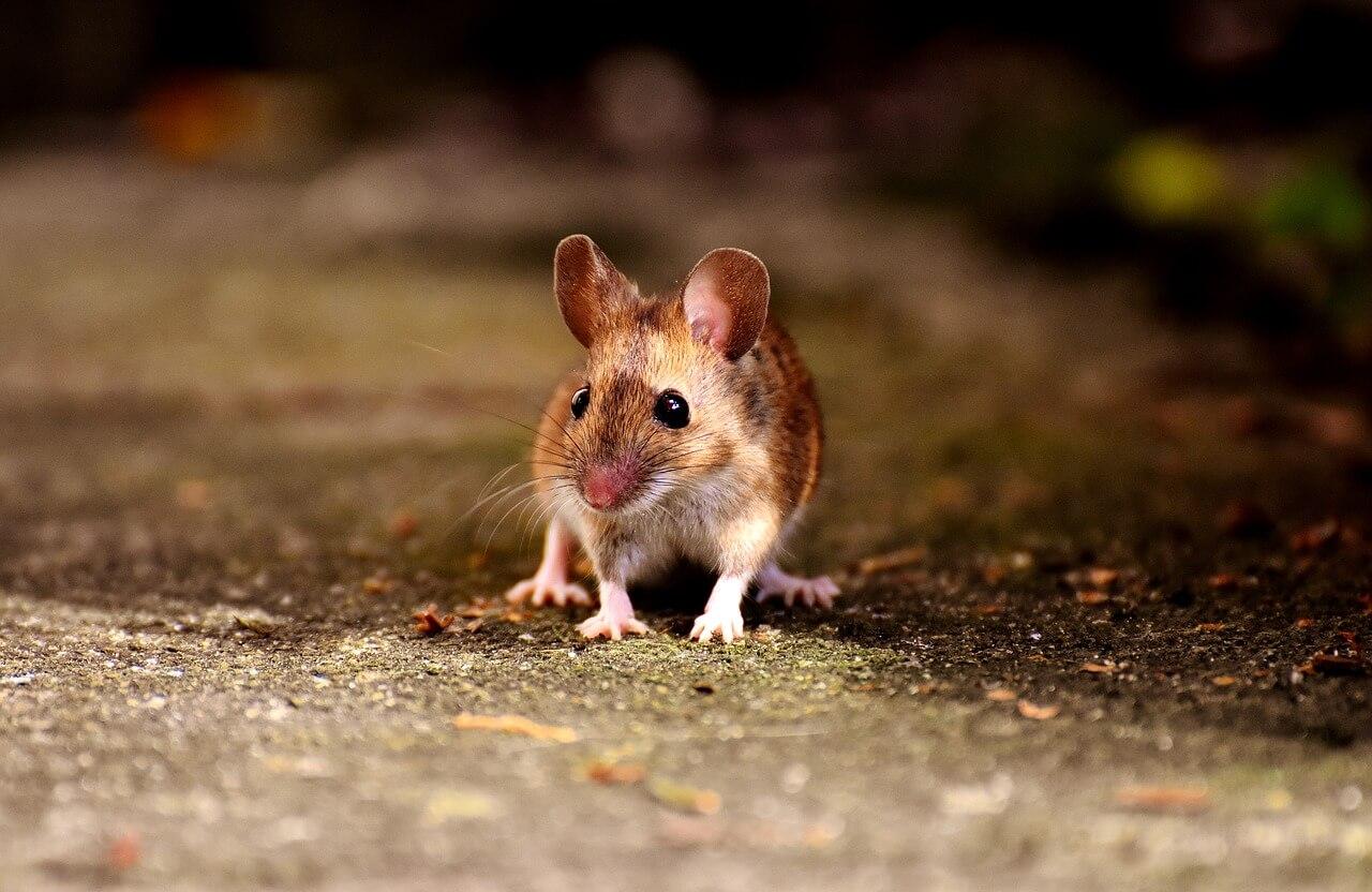 Victoire pour les animaux dans les laboratoires : le Parlement européen vote à une écrasante majorité un plan visant à mettre fin à l'expérimentation animale