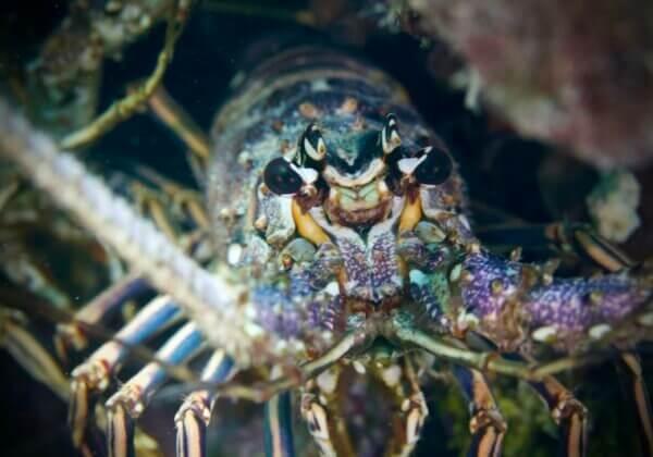 15 faits que les homards du monde entier veulent que vous sachiez